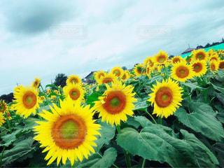 夏の写真・画像素材[654915]