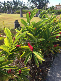 南国 プール 海 サイパン ハワイ グアム オーシャンビュー 植物 花 - No.300696
