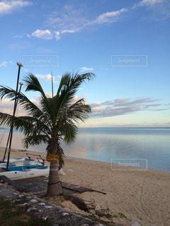 南国 海 サイパン ハワイ グアム オーシャンビュー 植物 ヤシの木の写真・画像素材[300730]