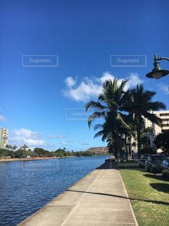 Hawaiiの写真・画像素材[309534]
