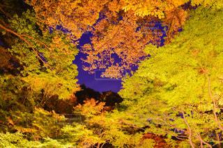 秋の写真・画像素材[337712]