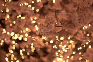 花の写真・画像素材[343071]