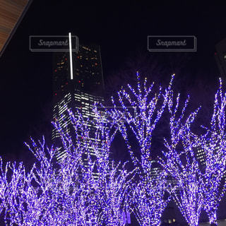 夜景の写真・画像素材[310488]