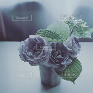 花の写真・画像素材[654229]