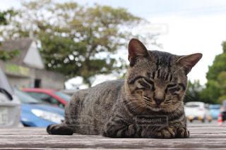 猫の写真・画像素材[314720]