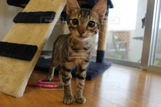 猫の写真・画像素材[317123]
