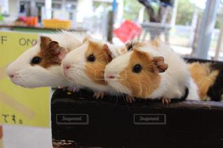小動物の写真・画像素材[397944]