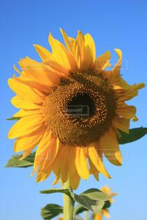 近くに黄色い花のアップの写真・画像素材[1055362]
