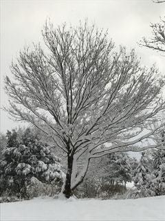 冬の写真・画像素材[314178]