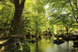 岐阜公園の写真・画像素材[1036353]