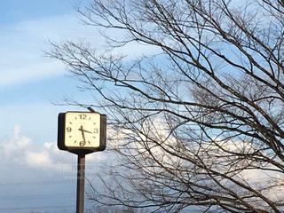 公園の時計の写真・画像素材[359740]