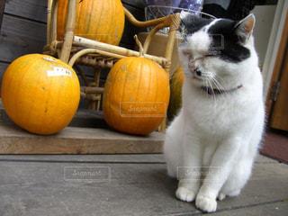 猫とかぼちゃの写真・画像素材[1124341]