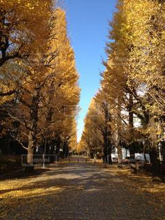 秋の写真・画像素材[304351]
