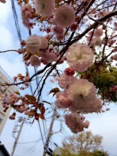 春の写真・画像素材[352685]