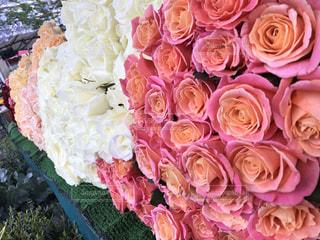 Flowerの写真・画像素材[593605]