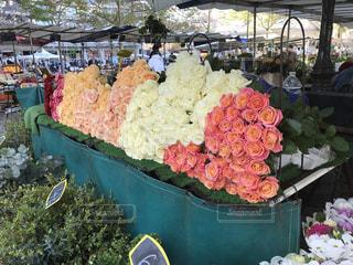 Flowerの写真・画像素材[593607]