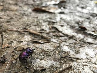 紫の写真・画像素材[651182]