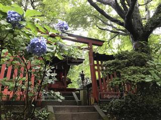 紫陽花 - No.651183