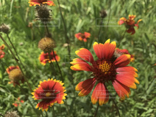 Flowerの写真・画像素材[663166]
