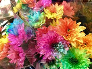 Flowerの写真・画像素材[1021649]