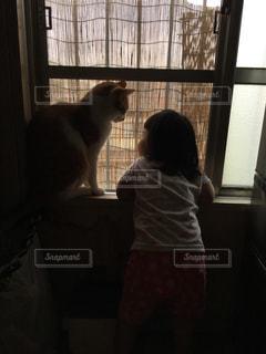 猫の写真・画像素材[301499]