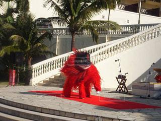 獅子舞の写真・画像素材[306248]