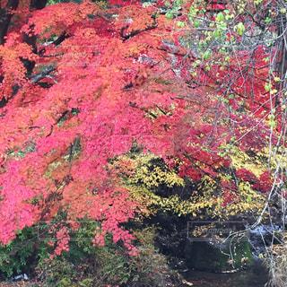 秋の写真・画像素材[303304]