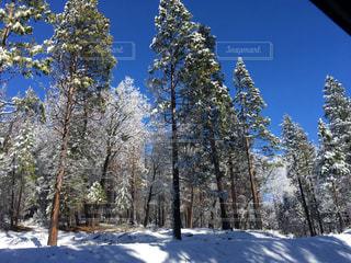 冬の写真・画像素材[301811]