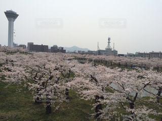 花の写真・画像素材[304206]