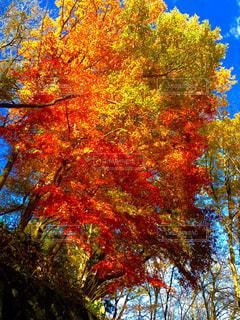 秋の写真・画像素材[319188]