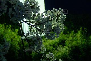 春の写真・画像素材[453211]