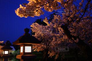 春 - No.453213