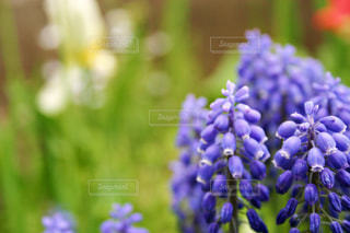 花の写真・画像素材[472064]