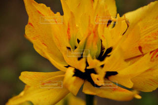 花の写真・画像素材[472070]