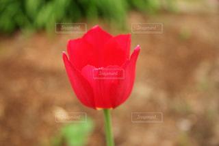 花の写真・画像素材[472071]