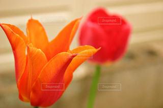 花の写真・画像素材[472072]
