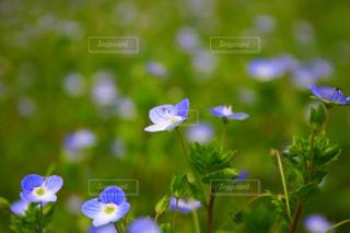 花の写真・画像素材[472078]