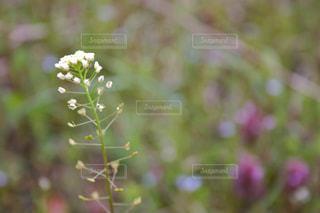 花の写真・画像素材[472081]