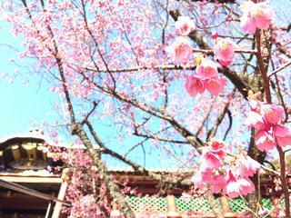 春の写真・画像素材[356250]