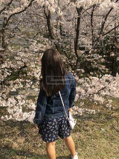 春の写真・画像素材[2049705]