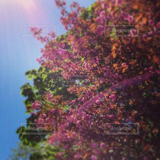 花の写真・画像素材[302230]