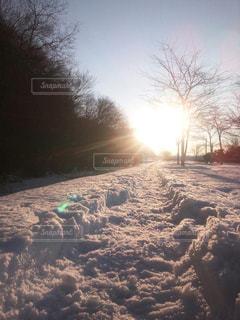 冬の写真・画像素材[310534]