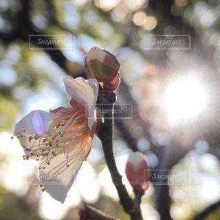 花の写真・画像素材[313283]