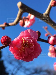 花の写真・画像素材[314780]