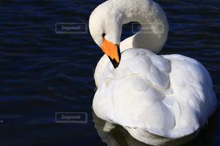 冬の写真・画像素材[306180]