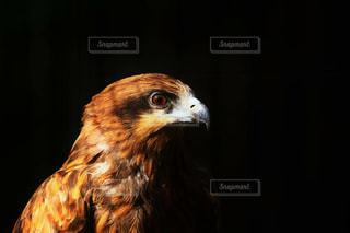 鳥の写真・画像素材[306939]