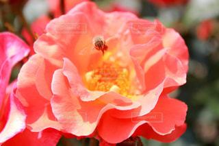 花の写真・画像素材[384378]