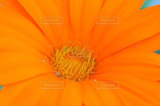 花の写真・画像素材[384399]
