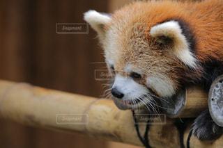 動物の写真・画像素材[384401]