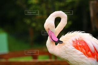 動物の写真・画像素材[384402]